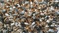 Avicentra- malý papoušek classic 20 kg