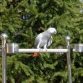 Stojan pro papoušky S007